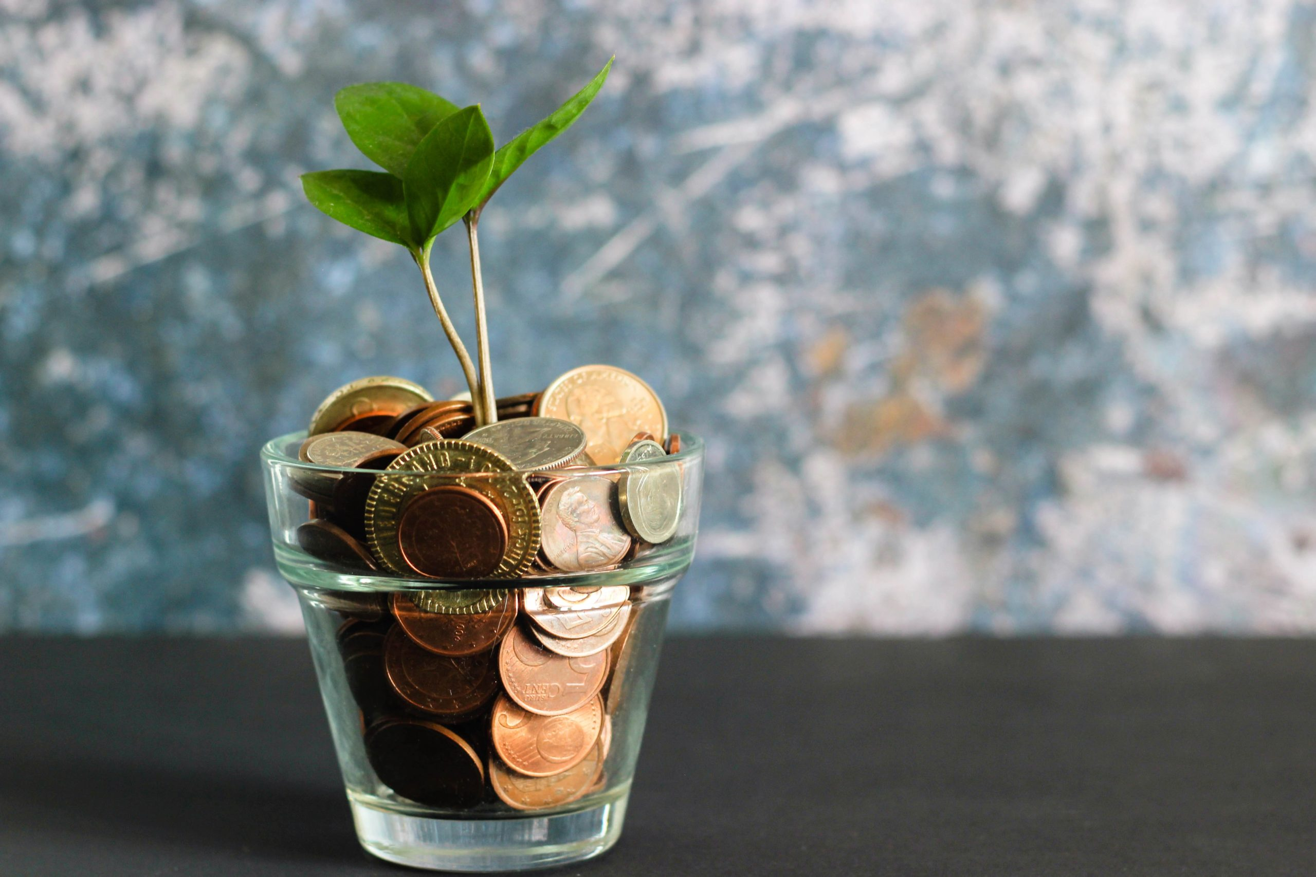 Photo of a plant in a glass with coins
